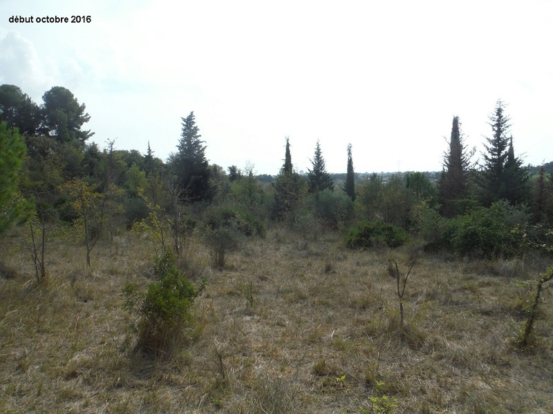 JdB de 4 hectares de pâtures dans le SUD : Janvier à la diète... + expérimentation Dscf4912