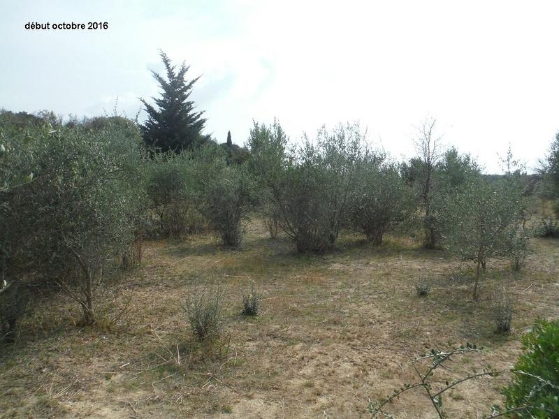 JdB de 4 hectares de pâtures dans le SUD : Janvier à la diète... + expérimentation Dscf4913