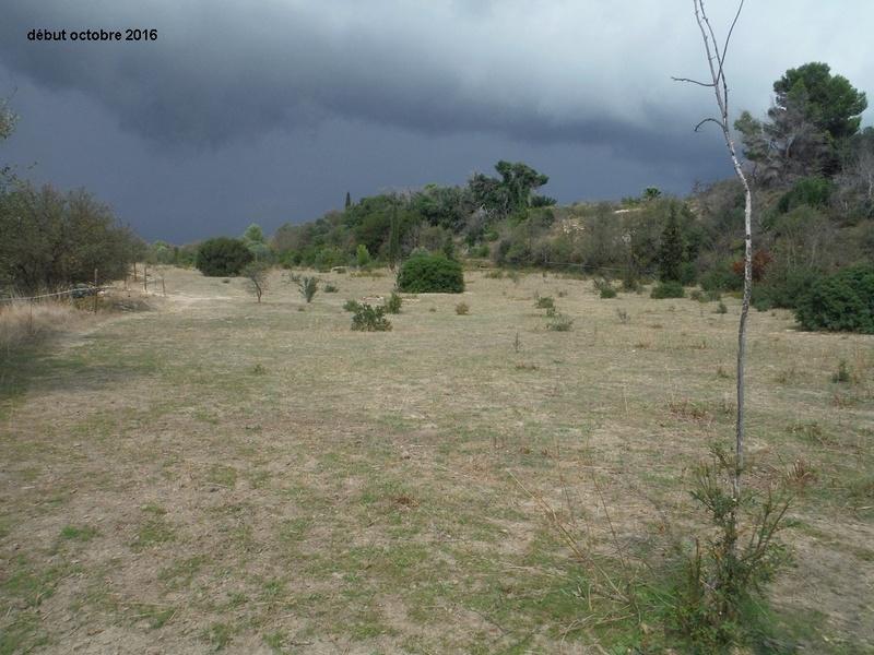JdB de 4 hectares de pâtures dans le SUD : Timide reprise après 8 mois de sécheresse Dscf4914