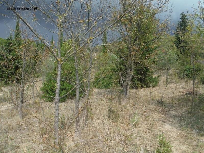 JdB de 4 hectares de pâtures dans le SUD : Janvier à la diète... + expérimentation Dscf4915