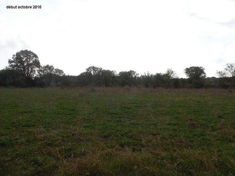 JdB de 4 hectares de pâtures dans le SUD : Timide reprise après 8 mois de sécheresse Dscf4916
