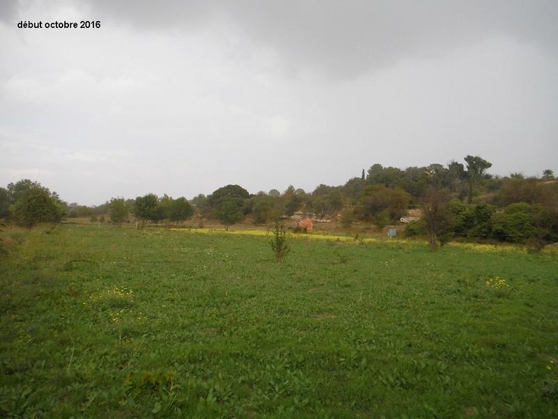 JdB de 4 hectares de pâtures dans le SUD : Janvier à la diète... + expérimentation Dscf4917