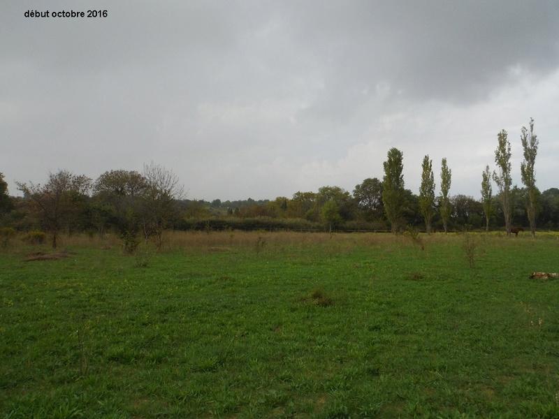 JdB de 4 hectares de pâtures dans le SUD : Timide reprise après 8 mois de sécheresse Dscf4918