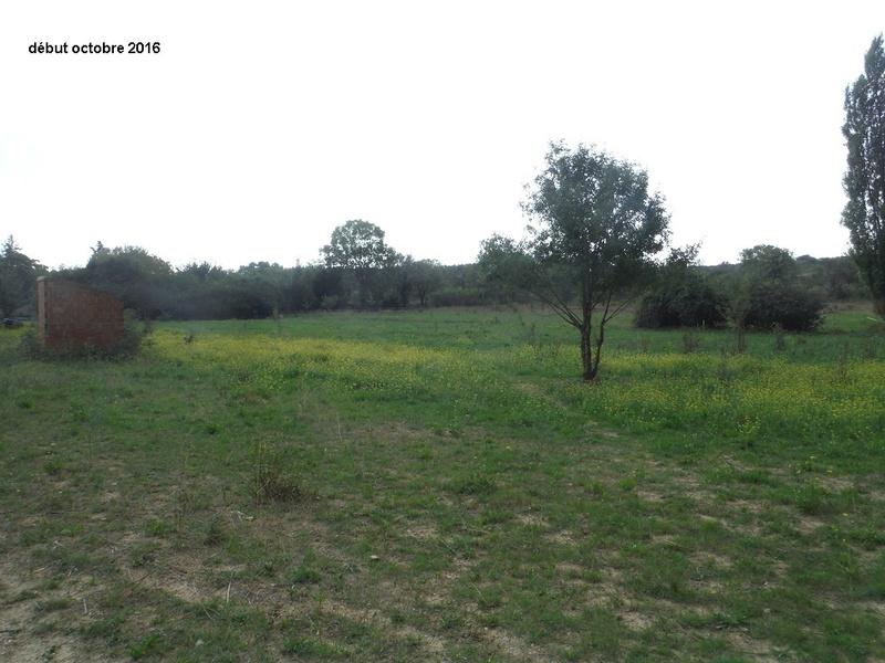 JdB de 4 hectares de pâtures dans le SUD : Janvier à la diète... + expérimentation Dscf4919