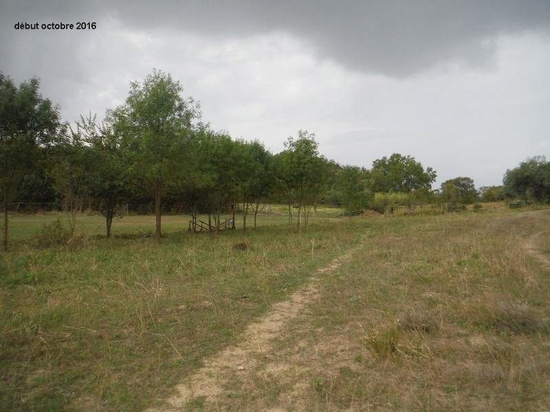 JdB de 4 hectares de pâtures dans le SUD : Janvier à la diète... + expérimentation Dscf4920