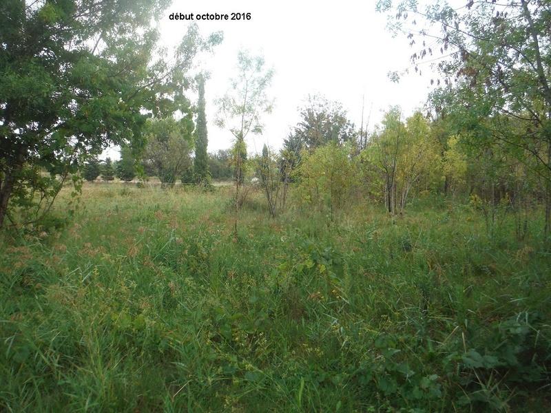 JdB de 4 hectares de pâtures dans le SUD : Avril 2019, et toujours la sécheresse... - Page 2 Dscf4923