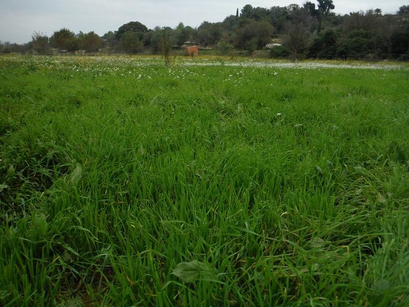 JdB de 4 hectares de pâtures dans le SUD : Avril 2019, et toujours la sécheresse... - Page 2 Dscf5820