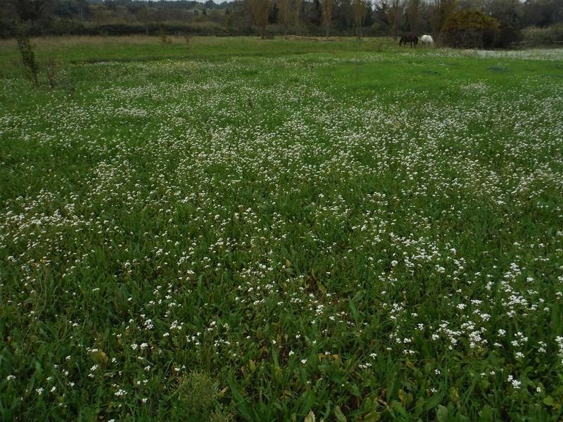 JdB de 4 hectares de pâtures dans le SUD : Avril 2019, et toujours la sécheresse... - Page 2 Dscf5821