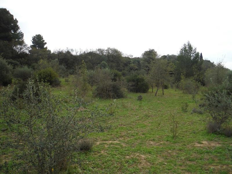 JdB de 4 hectares de pâtures dans le SUD : Avril 2019, et toujours la sécheresse... - Page 2 Dscf5822