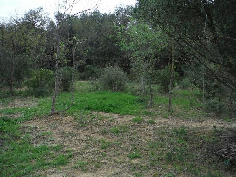 JdB de 4 hectares de pâtures dans le SUD : Avril 2019, et toujours la sécheresse... - Page 2 Dscf5823