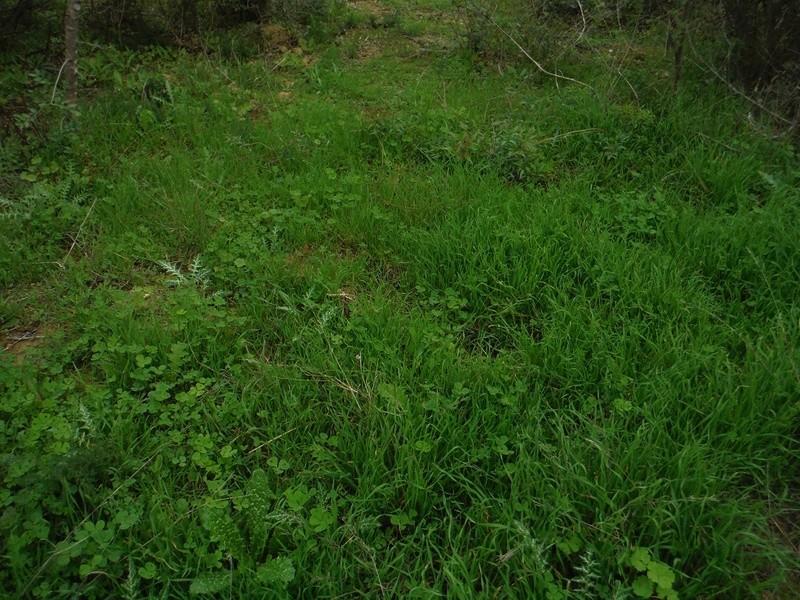 JdB de 4 hectares de pâtures dans le SUD : Avril 2019, et toujours la sécheresse... - Page 2 Dscf5825