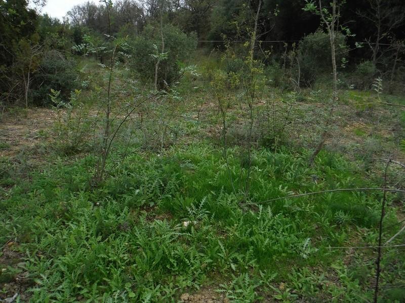 JdB de 4 hectares de pâtures dans le SUD : Avril 2019, et toujours la sécheresse... - Page 2 Dscf5826