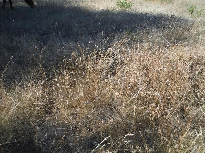 JdB de 4 hectares de pâtures dans le SUD : Janvier à la diète... + expérimentation Herbeg10
