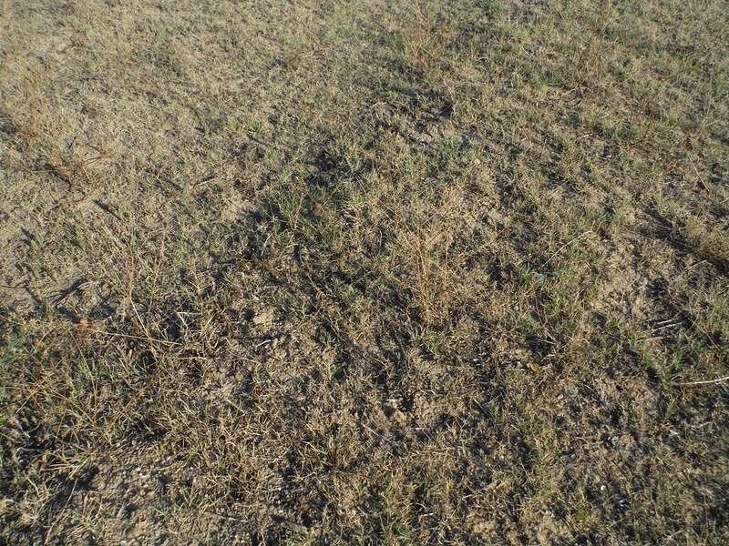 JdB de 4 hectares de pâtures dans le SUD : Timide reprise après 8 mois de sécheresse Herber10
