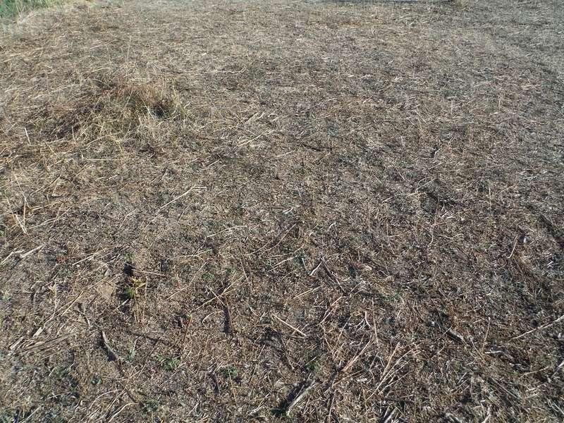 JdB de 4 hectares de pâtures dans le SUD : Janvier à la diète... + expérimentation Toutgr10
