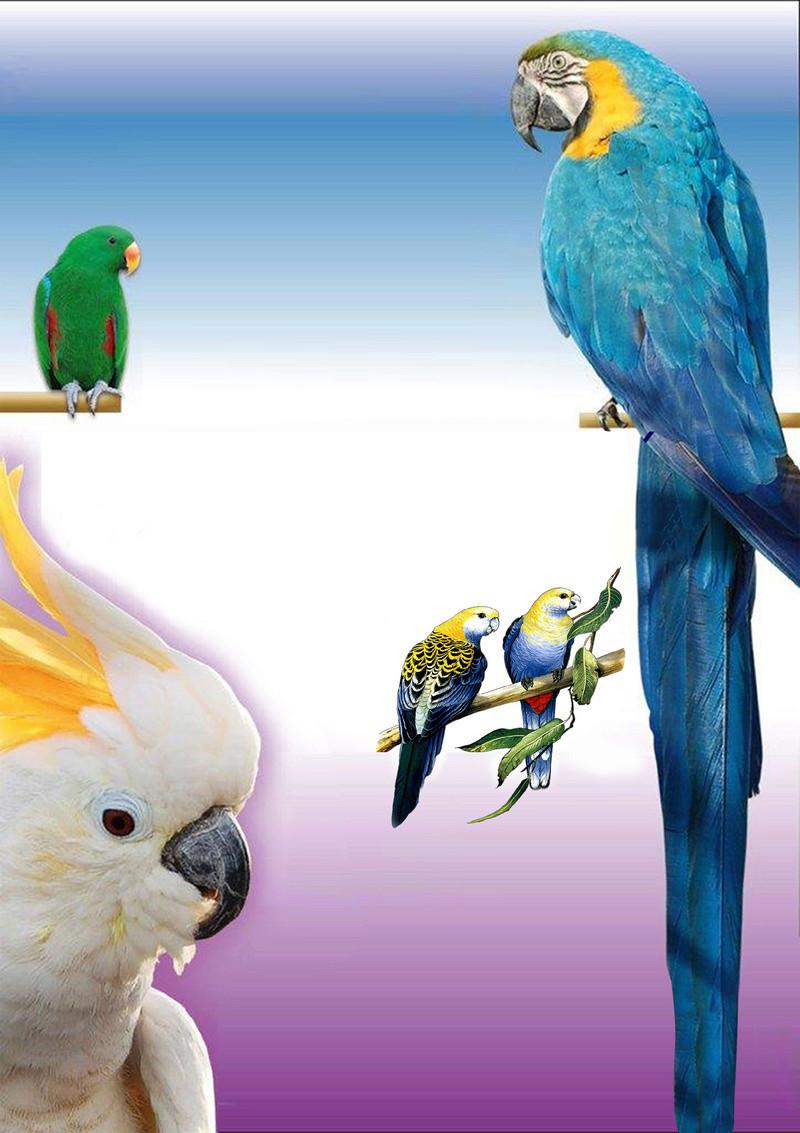 Photos d'oiseaux sur fond blanc 12215y10