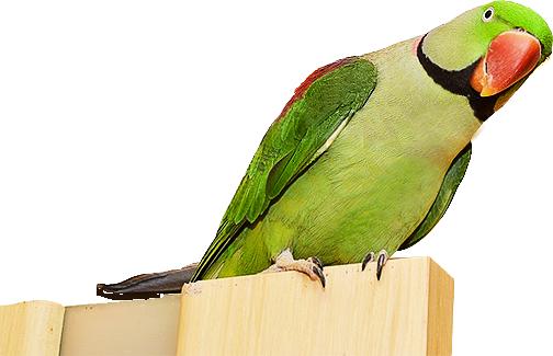 Photos d'oiseaux sur fond blanc Sans_t11