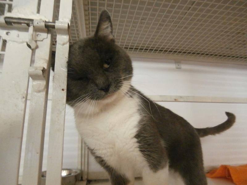 OURAGAN (mâle gris et blanc) Pa054618