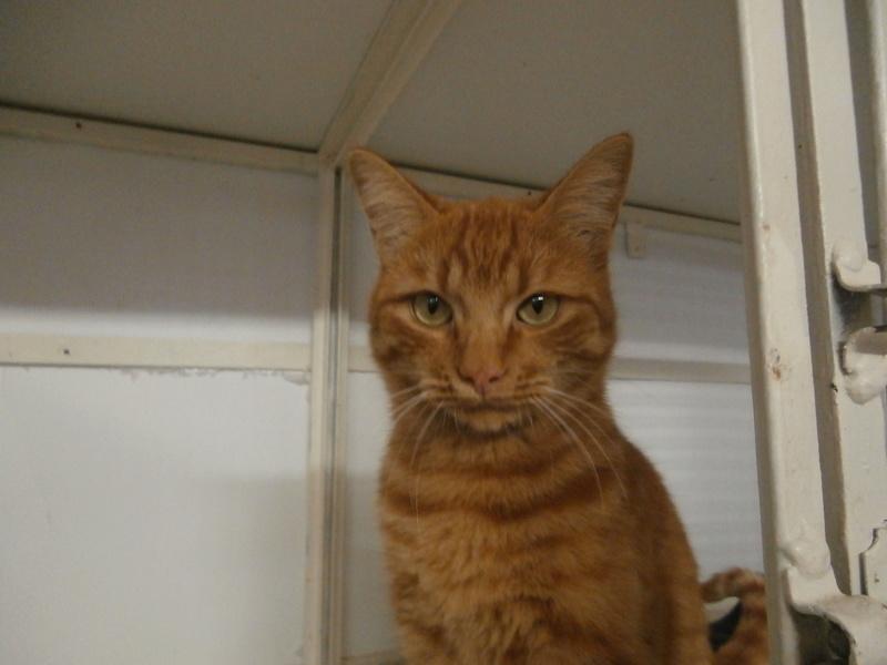 EVIL (mâle roux tigré) Pa054622