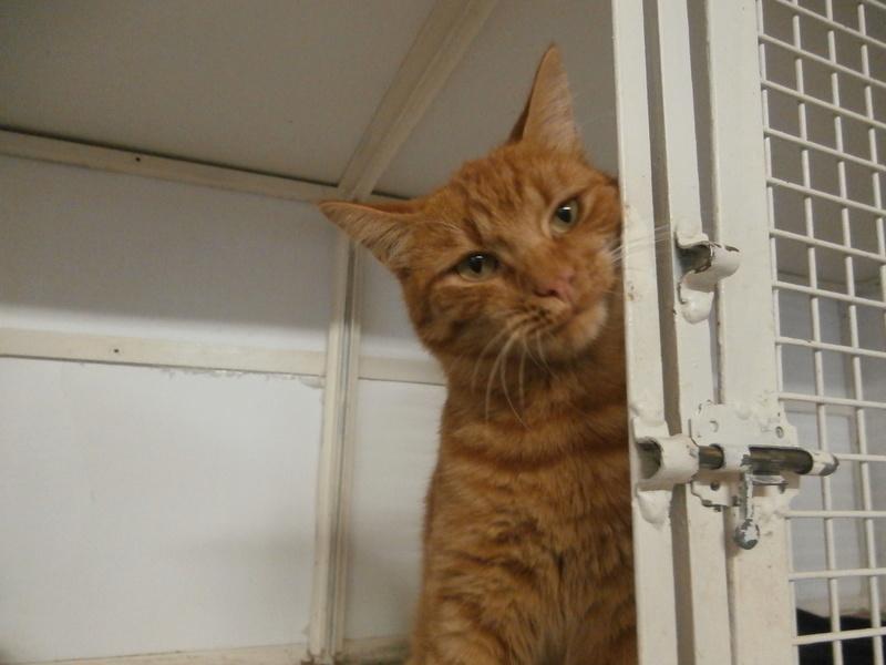 EVIL (mâle roux tigré) Pa054623