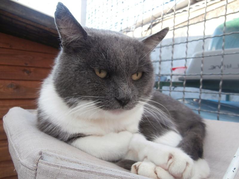 OURAGAN (mâle gris et blanc) Pa154816
