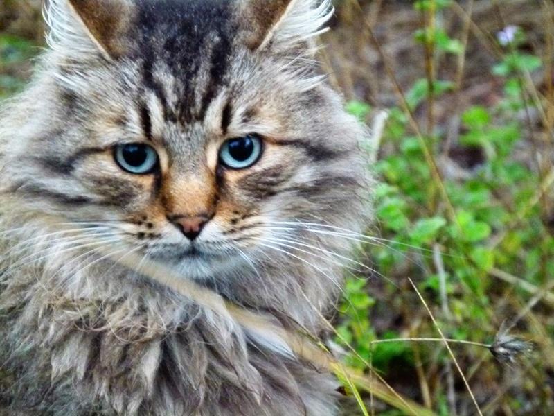 LEANNE - chat femelle, née environ??? - Adoptée dans le 84 Kaline10