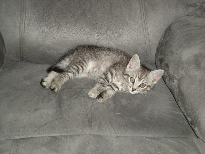 Spécials Photos : Avant/Après de nos chats - Page 15 Kitty_10
