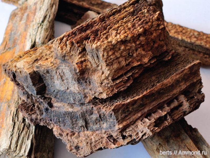 Structures et bois fossiles 13084711