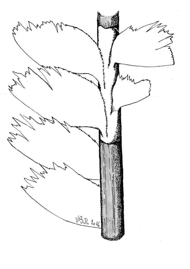 Flore Carbonifère des Alpes Françaises part 1 - Page 4 Img00610