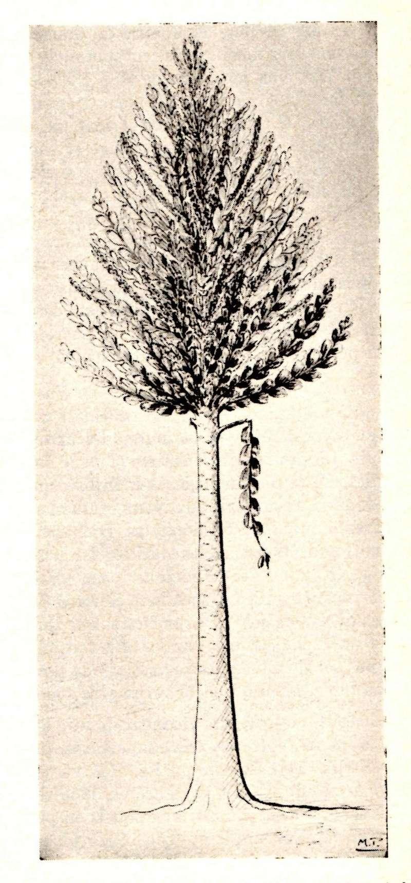 Flore Carbonifère des Alpes Françaises part 1 - Page 4 Img00710