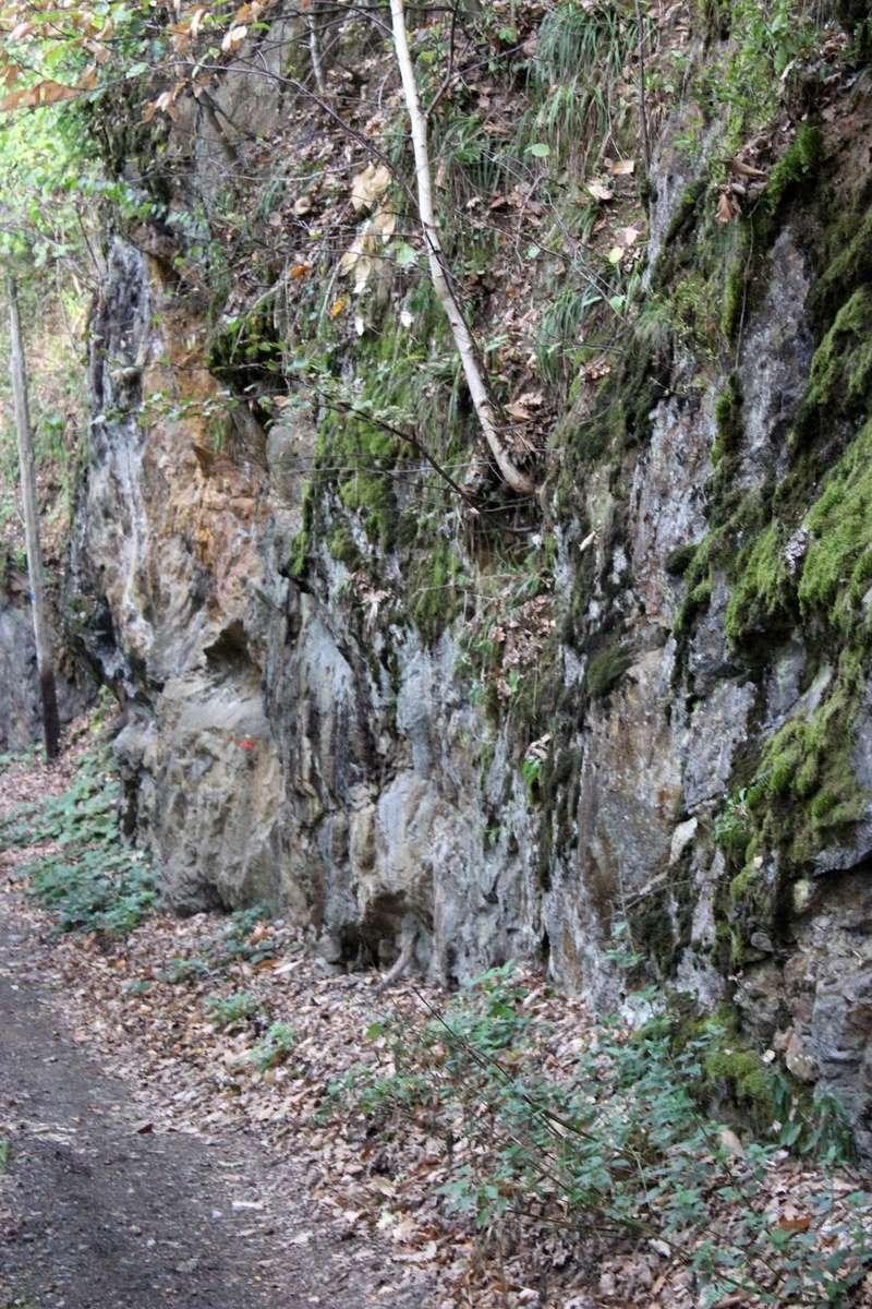 Flore Carbonifère des Alpes Françaises part 1 - Page 4 Img_0426