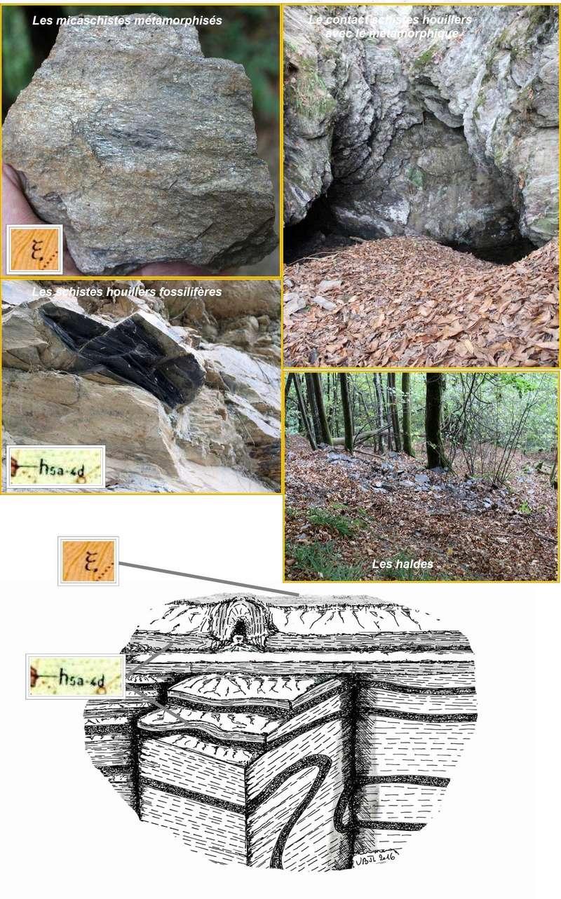 Flore Carbonifère des Alpes Françaises part 1 - Page 4 Nouvea10