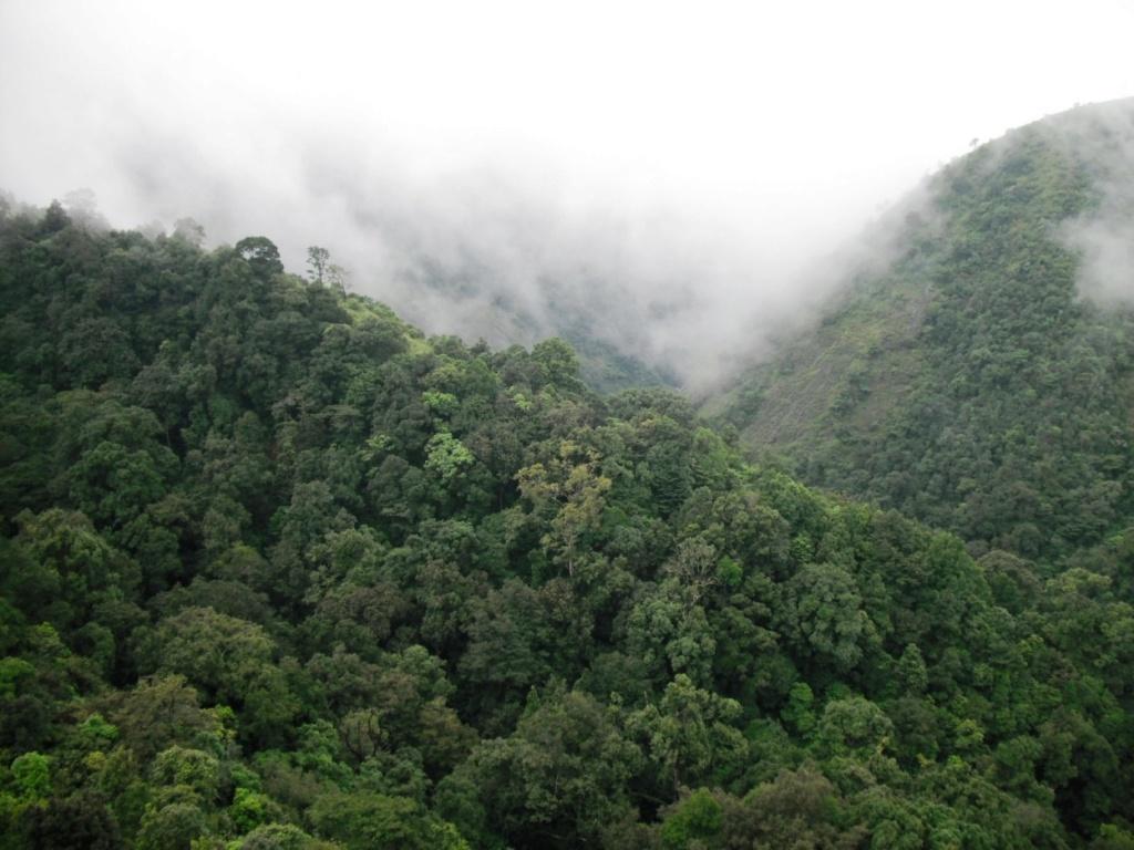 [Les Portugais en Inde 1500] Contexte historique Forest11