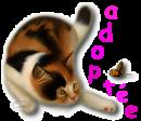 Adoption de YOKO, chat- Octobre 2016. 27285210