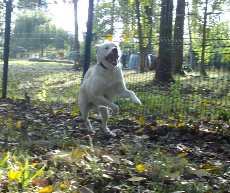 LOY, le chien à l'oreille cassée Lundi_20