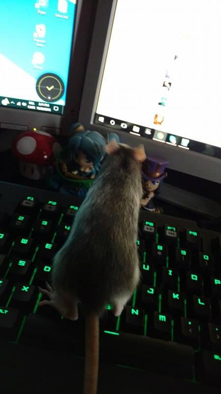 Mes petits rats à moi! 14813610