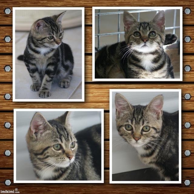 AINA, chat femelle Aina511