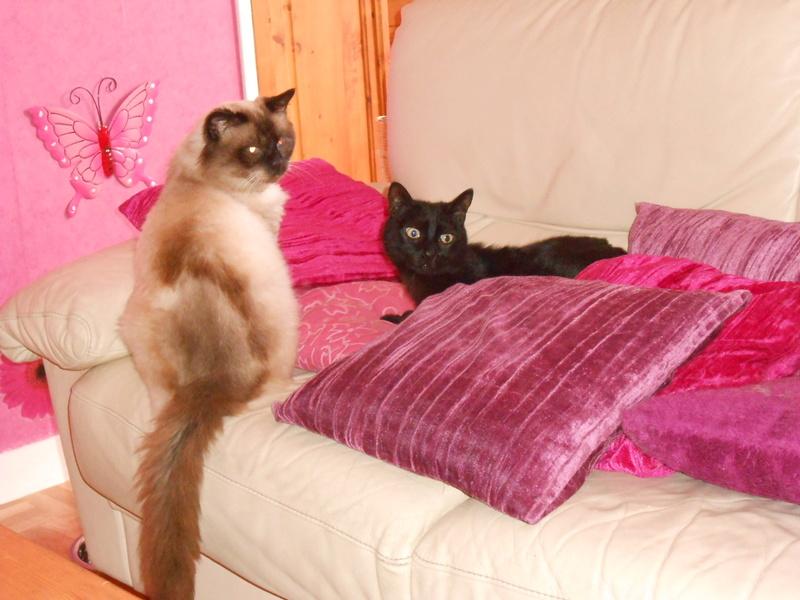 urgent : besoin d'une FA/d'adoptants sans chat mâle... Dscn8410