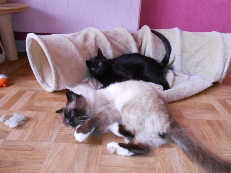 urgent : besoin d'une FA/d'adoptants sans chat mâle... Dscn8510