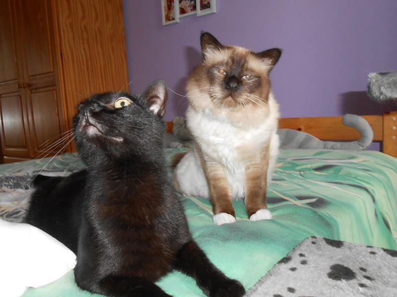 urgent : besoin d'une FA/d'adoptants sans chat mâle... Dscn8710