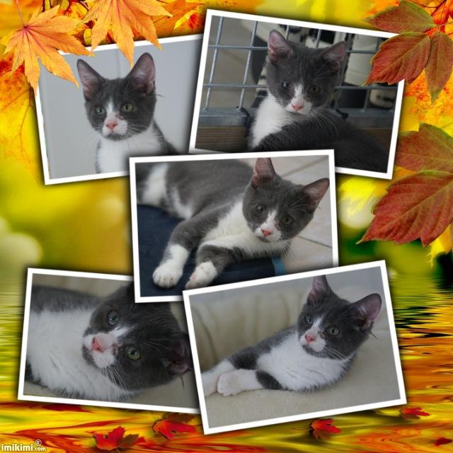 IRAIS, chat femelle Irais711