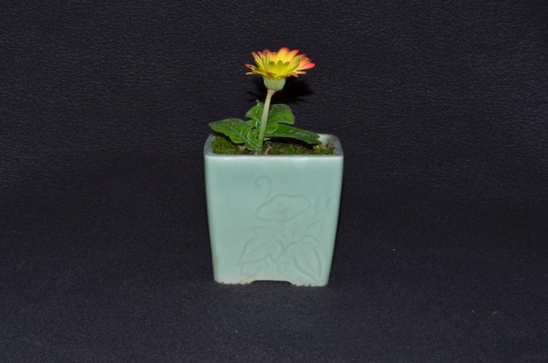 Gerbera daisy Dsc_0011