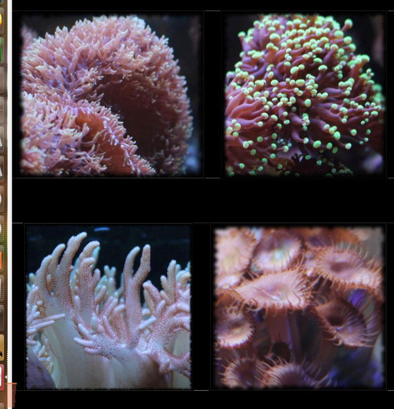 Nom de coraux Captur10