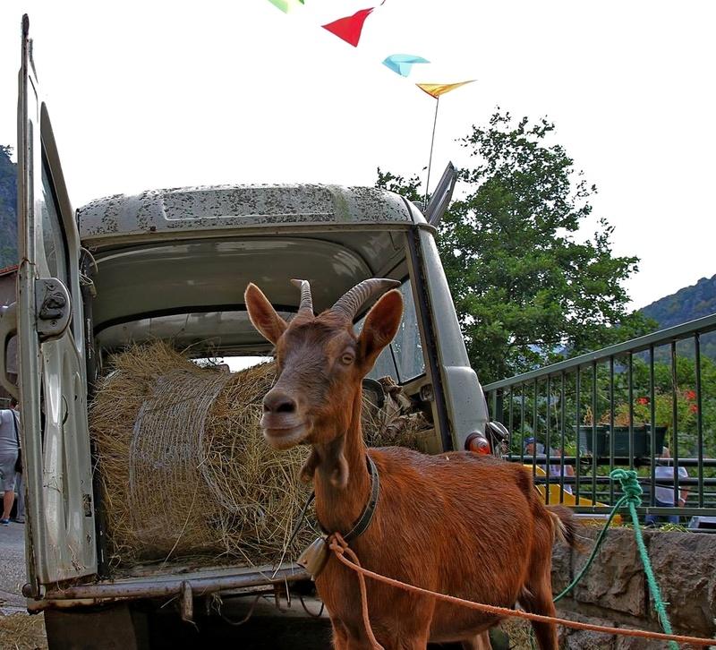 Expo autos anciennes ... C'est à Fontan le 28 août ! Mascot10