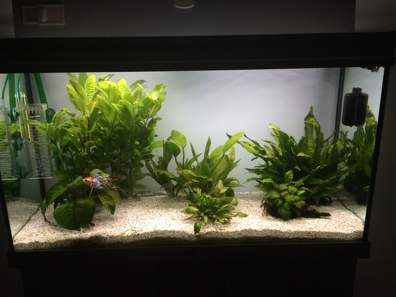 Algues Vertes Img_4410