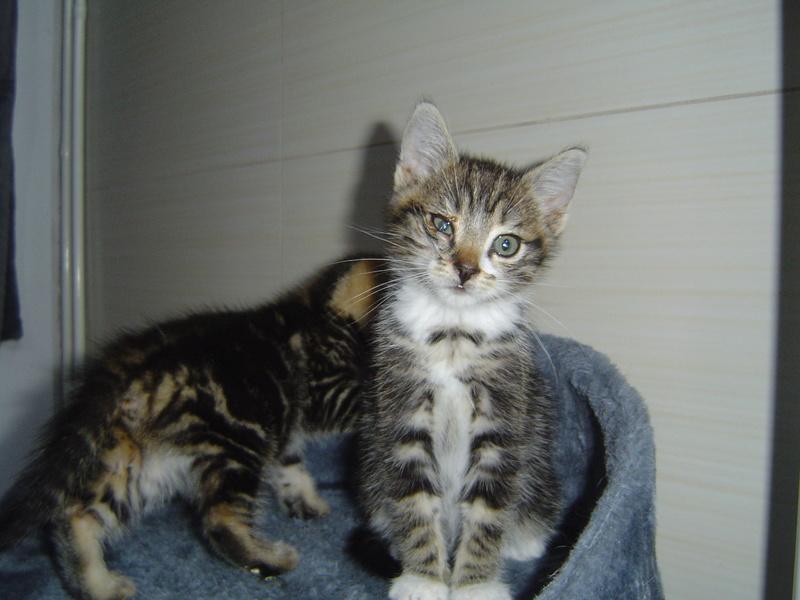 Mitaine et Mirabelle, petits loustics des rues Dsc07012