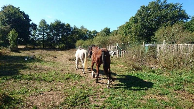 EXIT - PSAr né en 1993 - adopté en septembre 2016 par Annie et Jean-Pierre 14483510