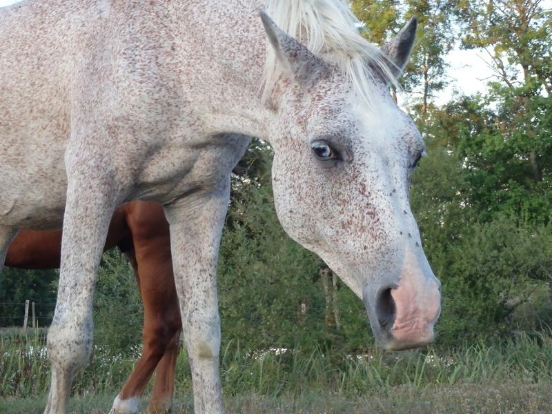 EXIT - PSAr né en 1993 - adopté en septembre 2016 par Annie et Jean-Pierre P8310310