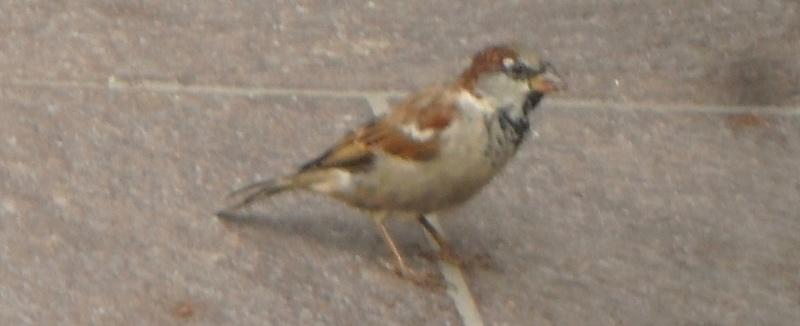 Petits oiseaux  2010