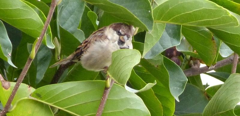 Petits oiseaux  2110